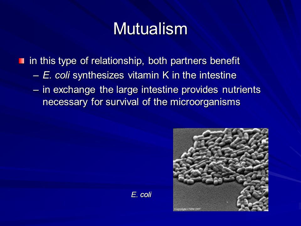 Mutualism in this type of relationship, both partners benefit
