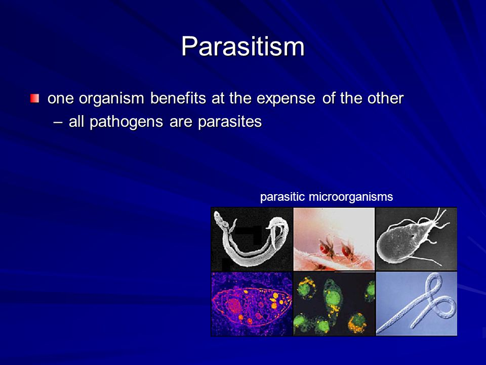Parasitism one organism benefits at the expense of the other