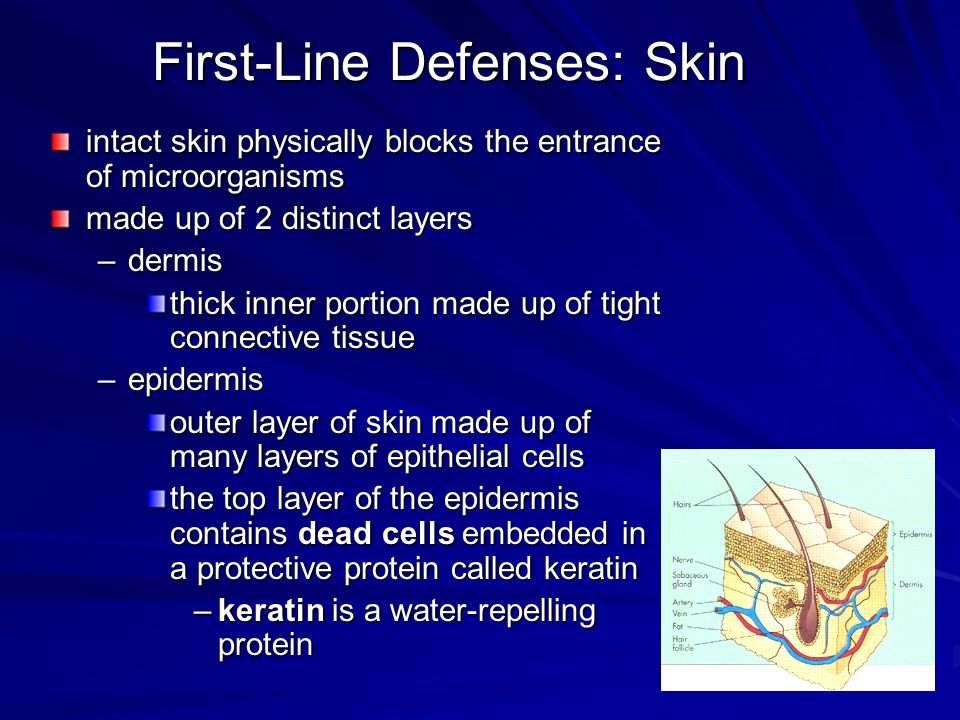 First-Line Defenses: Skin