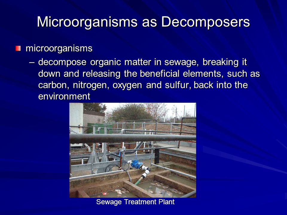 Microorganisms and Bioremediation