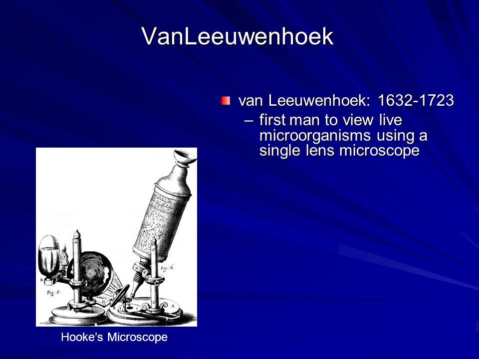 Animalcules Van Leeuwenhoek s animalcules