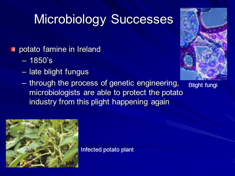 What is a Microorganism