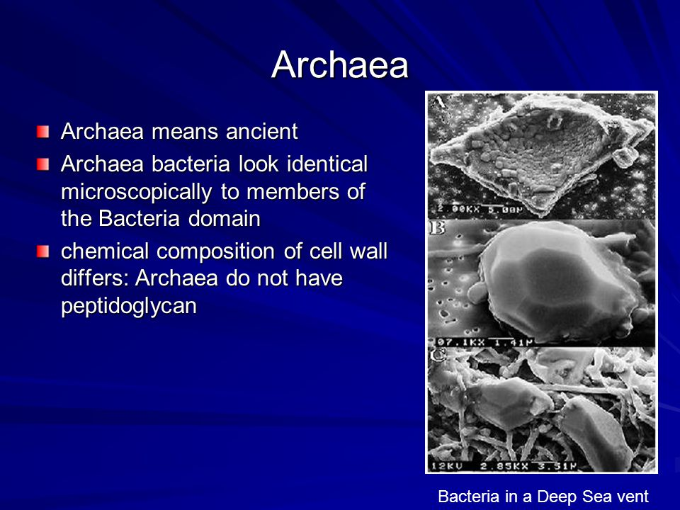 Archaea have the ability to grow in extreme environments