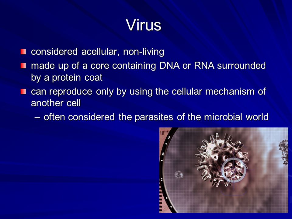 Viroids viroids single piece of nucleic acid with no protein coat