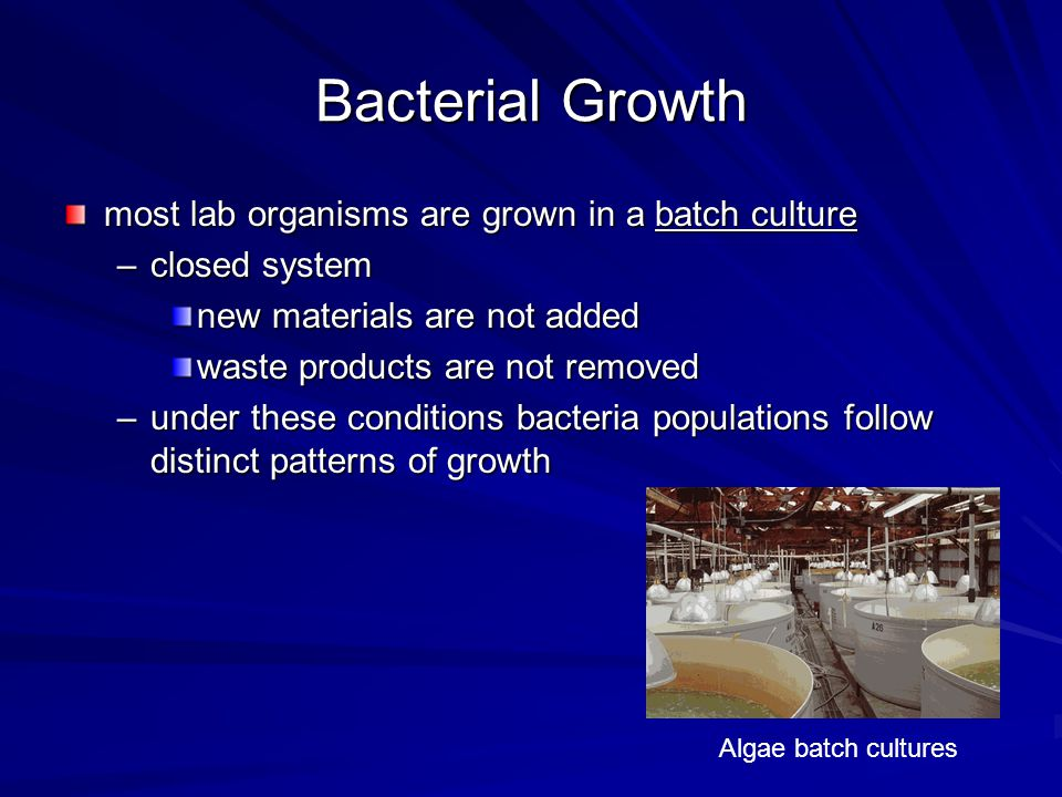 Bacterial Growth most lab organisms are grown in a batch culture