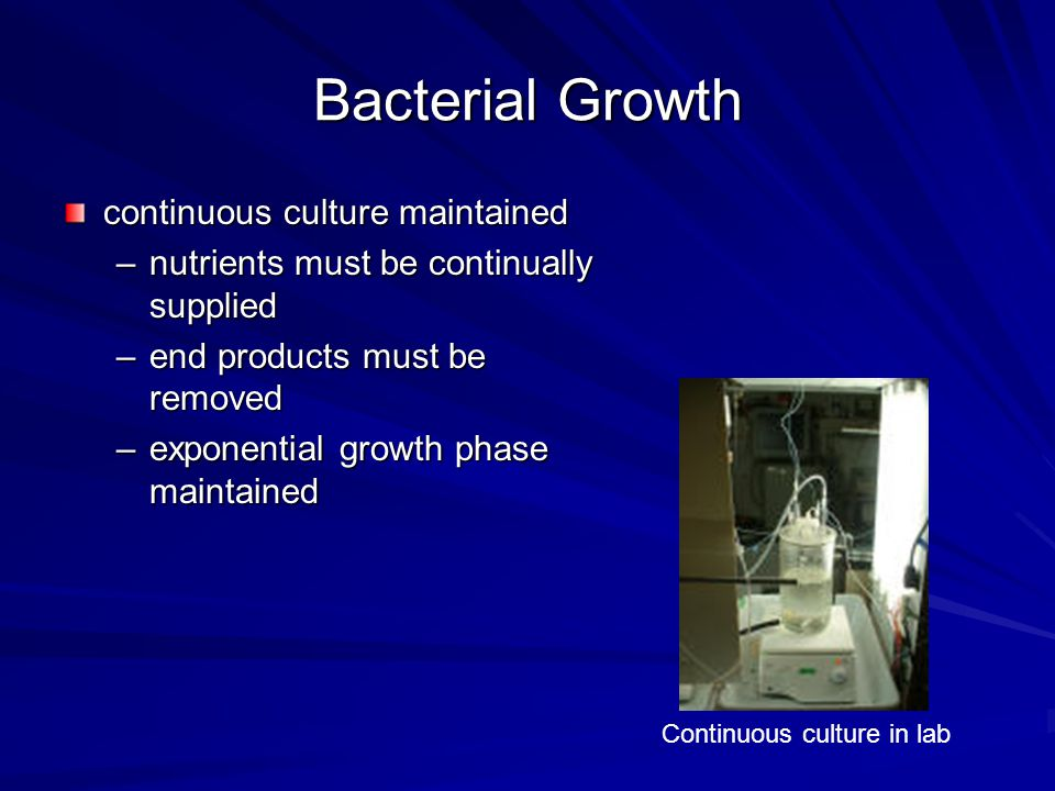 Bacterial Growth continuous culture maintained