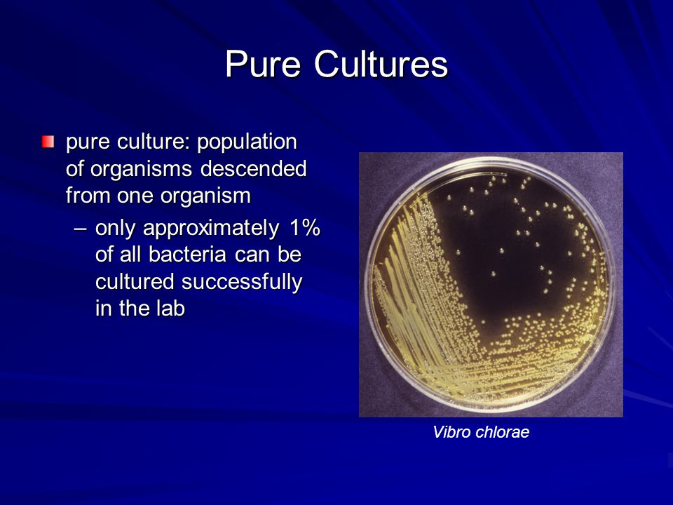 Pure Cultures pure culture: population of organisms descended from one organism.