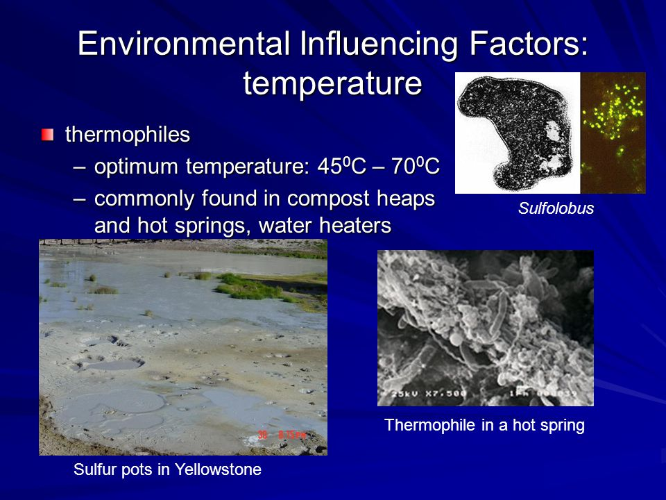 Environmental Influencing Factors: temperature