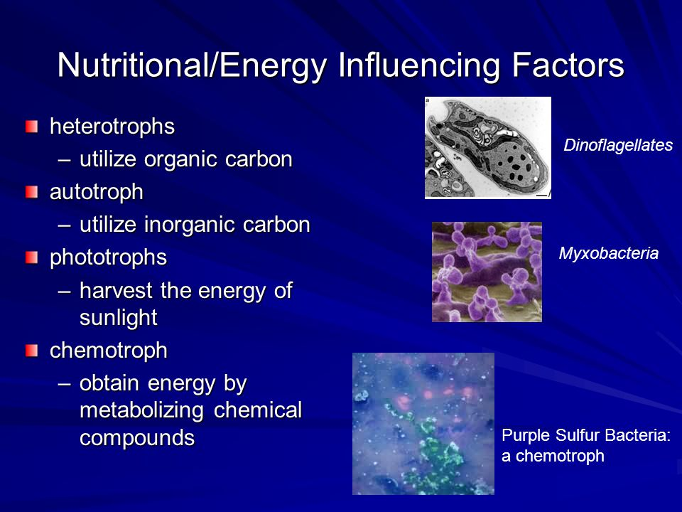Nutritional/Energy Influencing Factors