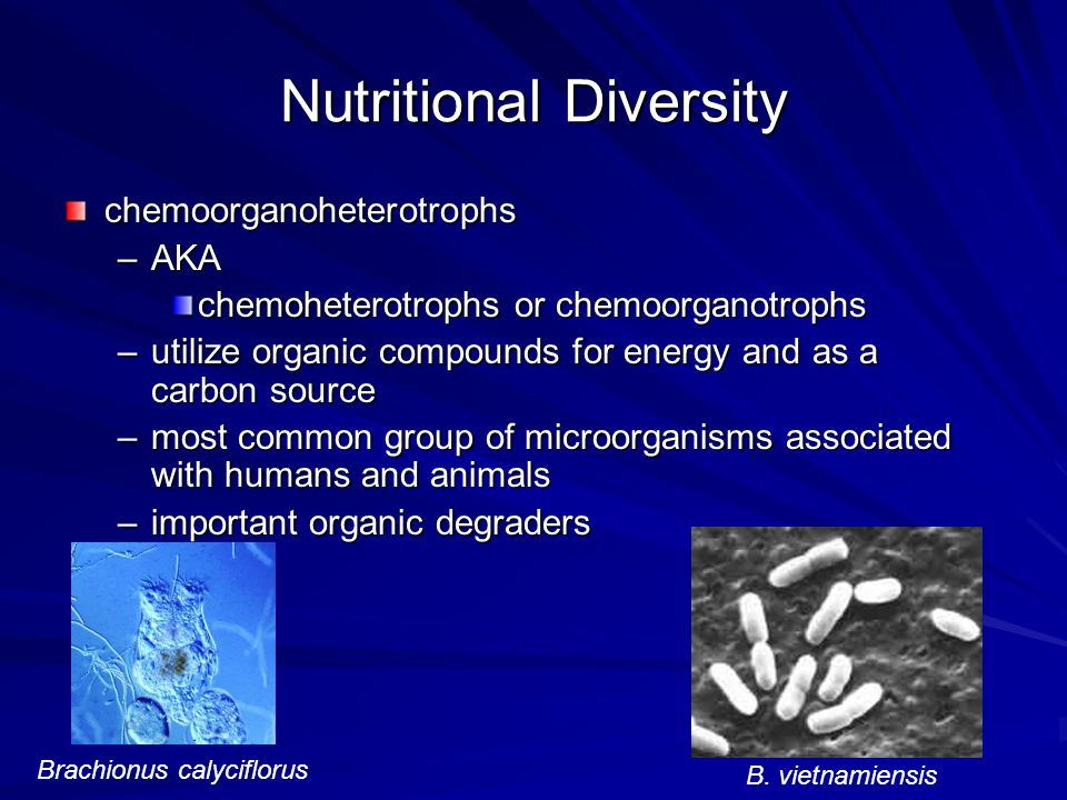 Nutritional Diversity