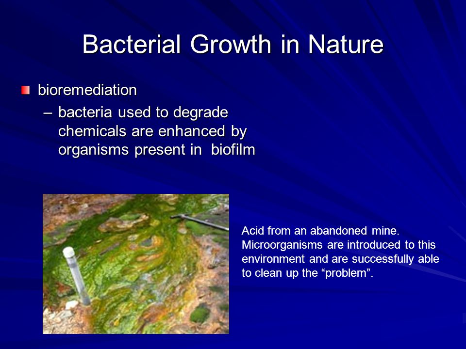 Bacterial Growth in Nature