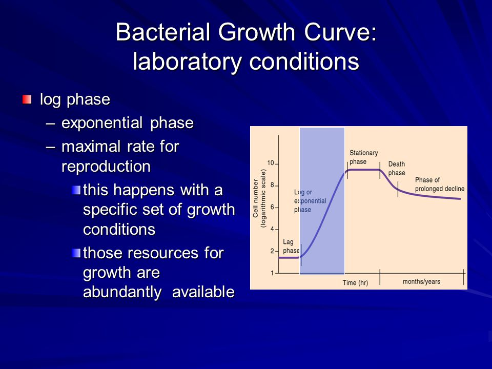 Bacterial Growth Curve: laboratory conditions