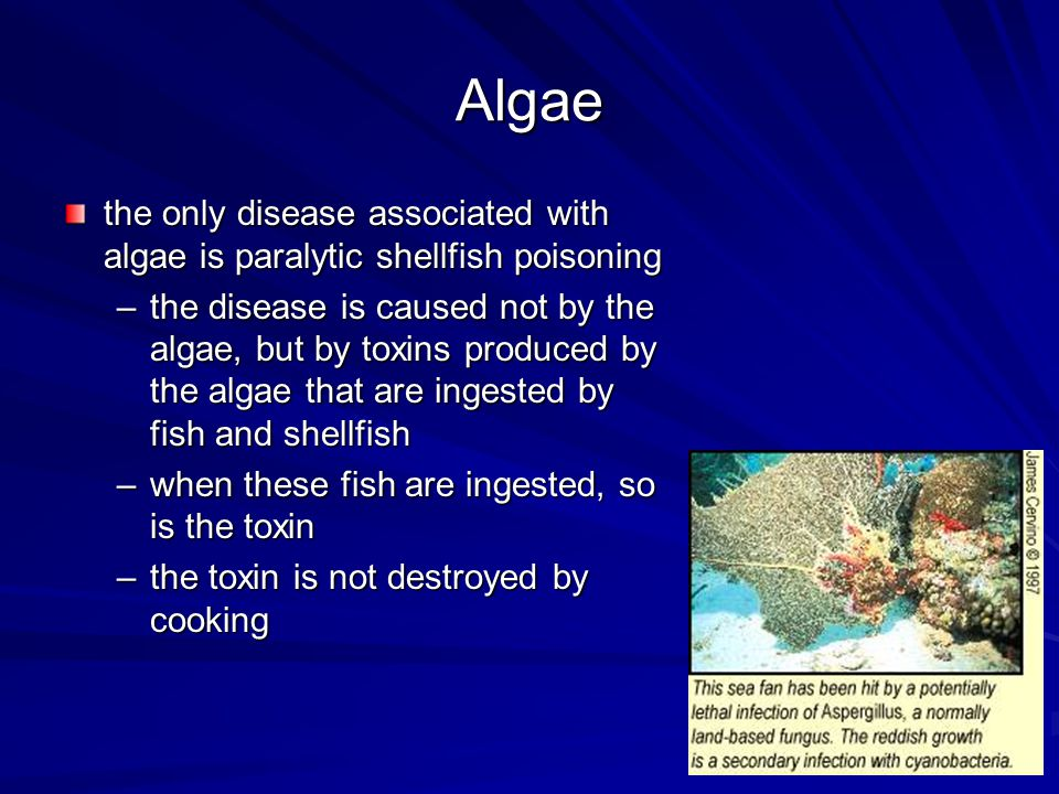 Algae the only disease associated with algae is paralytic shellfish poisoning.