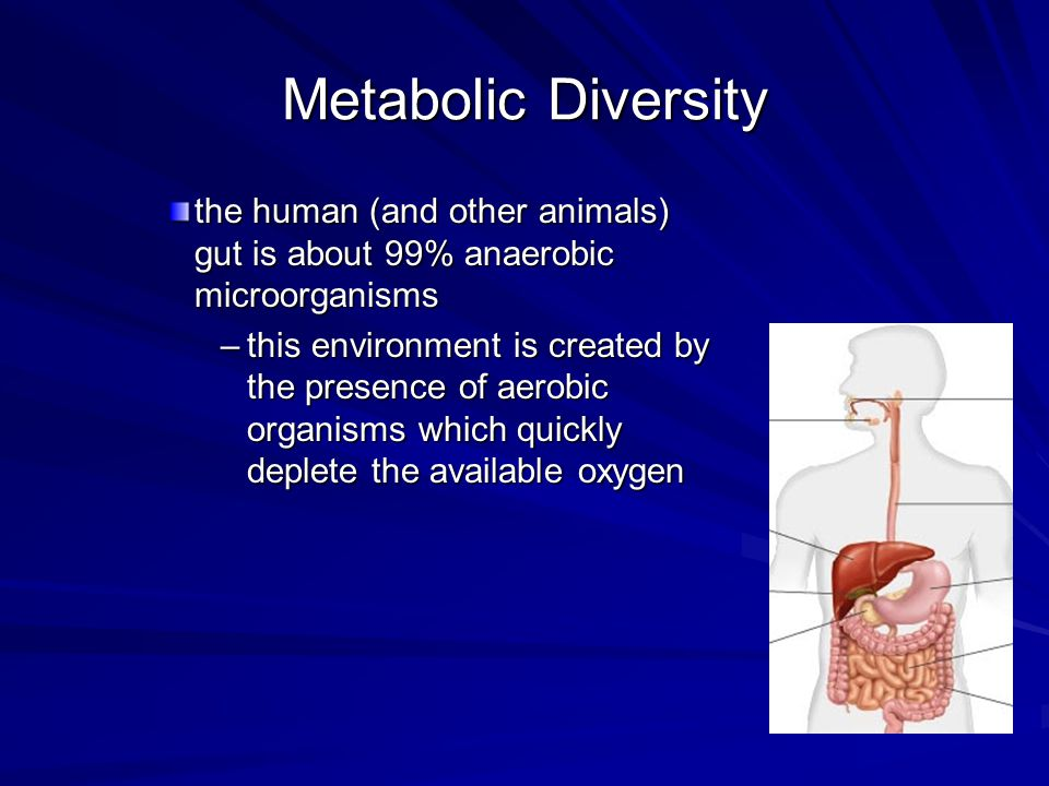 Metabolic Diversity the human (and other animals) gut is about 99% anaerobic microorganisms.