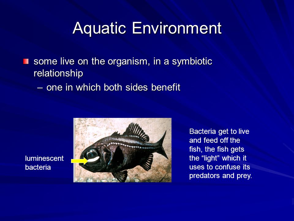 Aquatic Environment some live on the organism, in a symbiotic relationship. one in which both sides benefit.