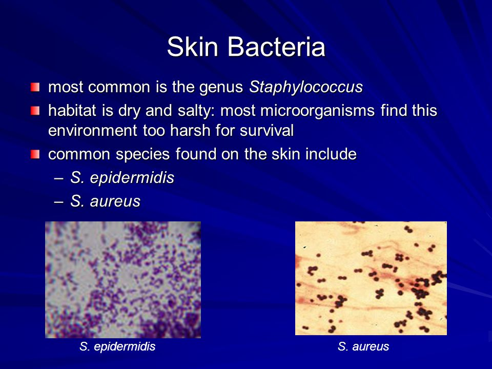 Skin Bacteria most common is the genus Staphylococcus