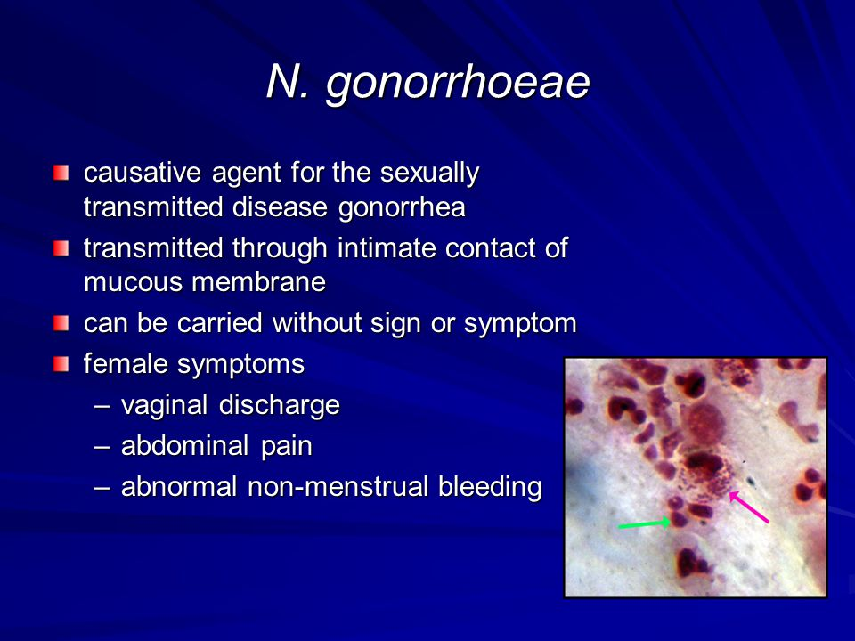 N. gonorrhoeae causative agent for the sexually transmitted disease gonorrhea. transmitted through intimate contact of mucous membrane.