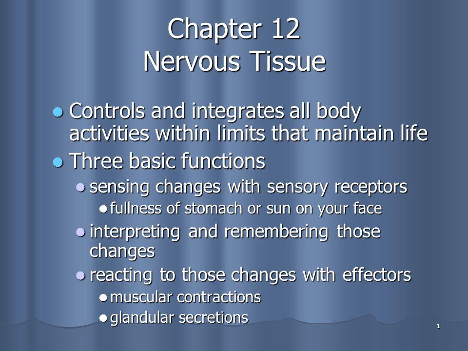 Chapter 12 Nervous Tissue