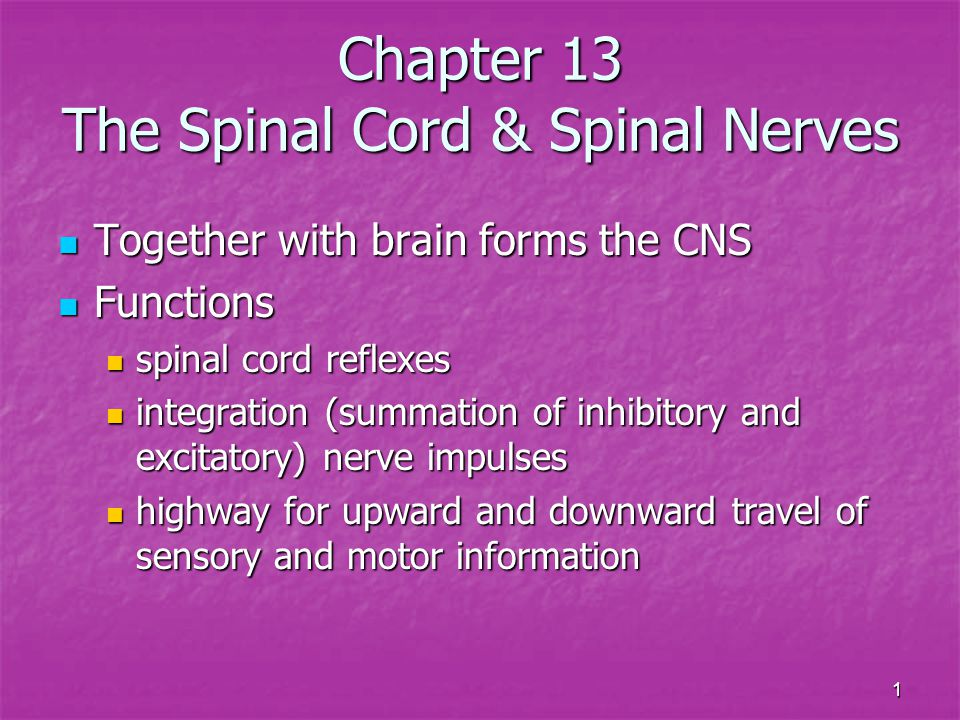 Chapter 13 The Spinal Cord & Spinal Nerves