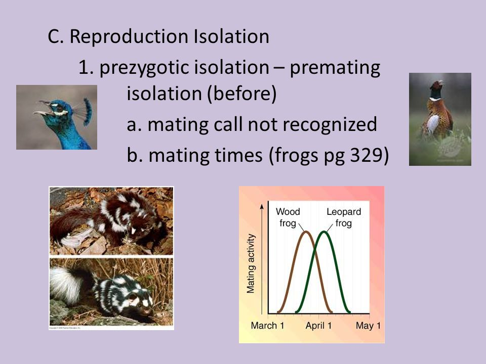 C. Reproduction Isolation 1