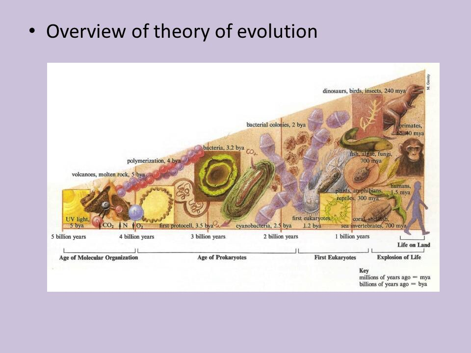 Overview of theory of evolution