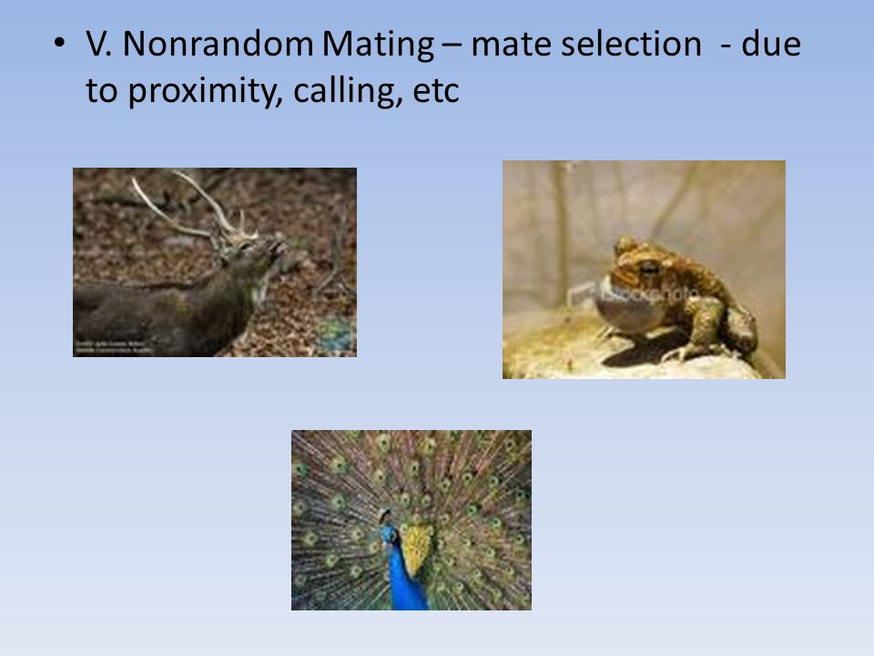 V. Nonrandom Mating – mate selection - due to proximity, calling, etc