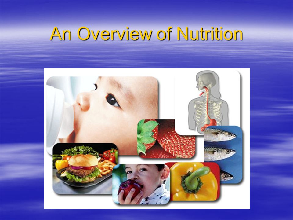 An Overview of Nutrition