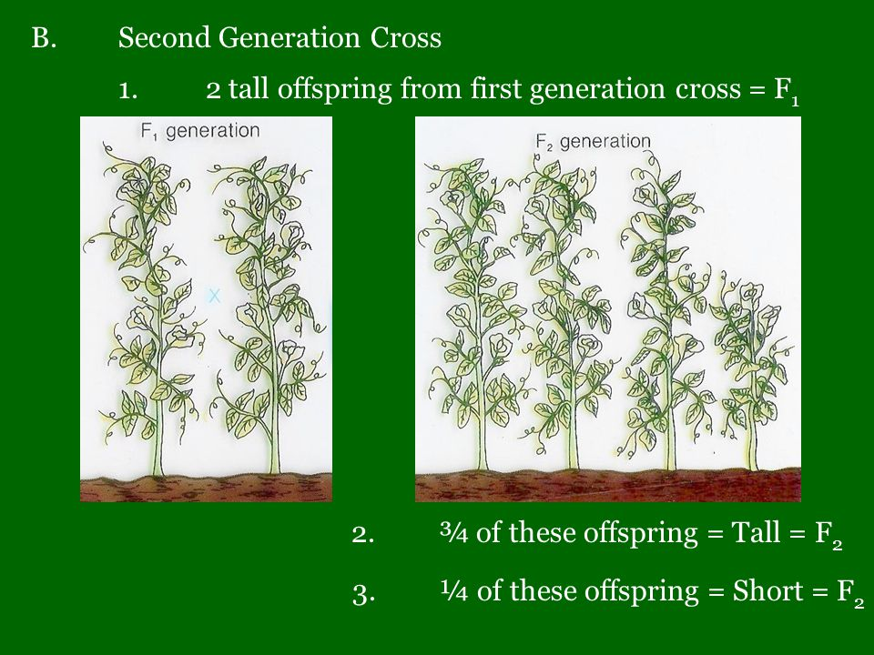 B. Second Generation Cross