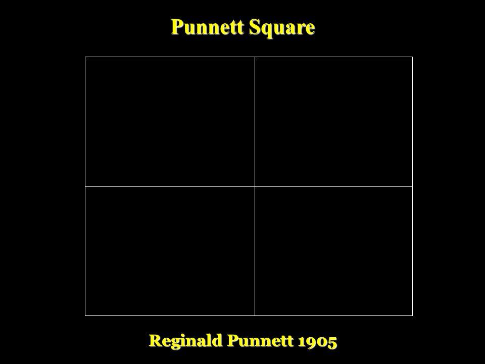 Punnett Square Reginald Punnett 1905