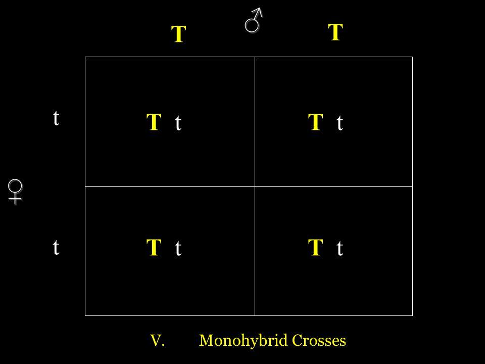 ♂ T T t T t T t ♀ t T t T t V. Monohybrid Crosses
