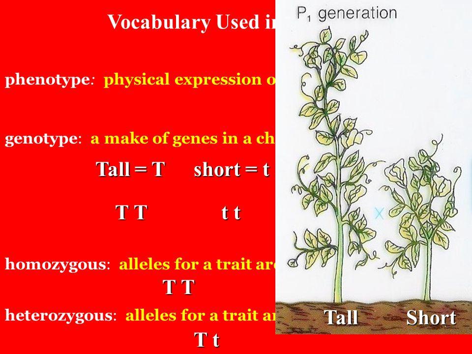 Vocabulary Used in Genetics