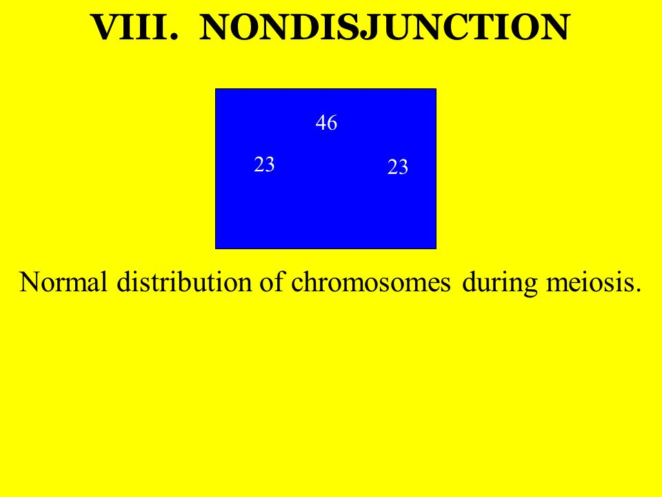 Normal distribution of chromosomes during meiosis.