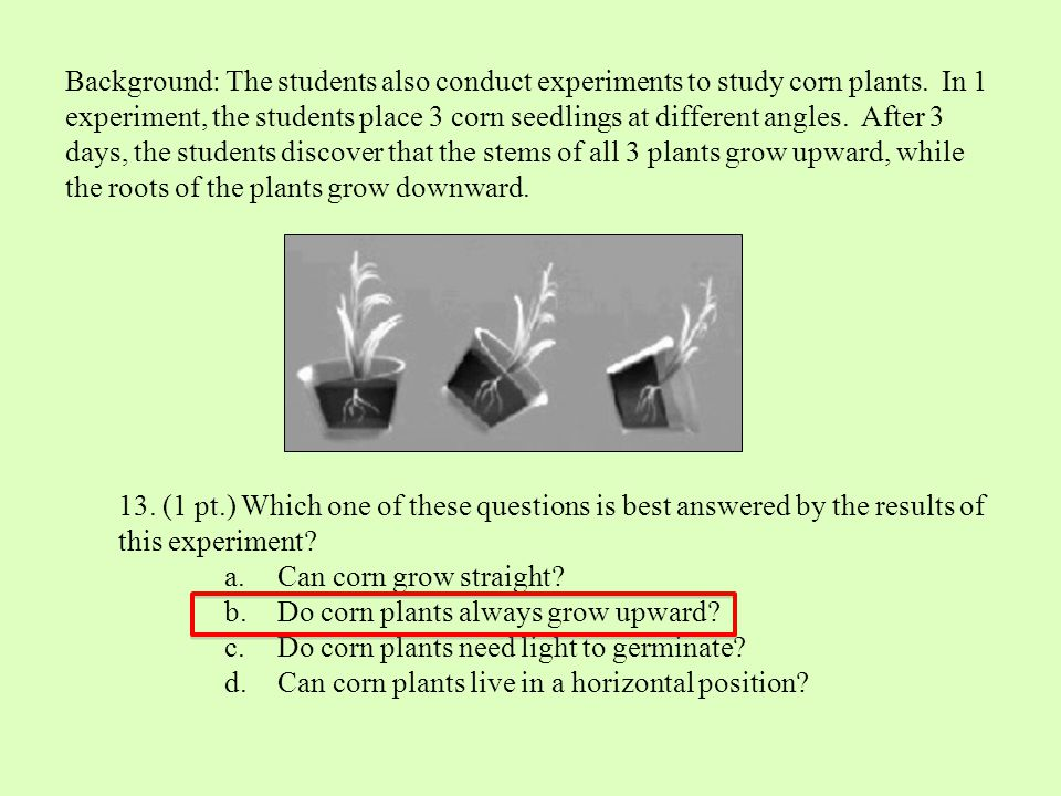 Background: The students also conduct experiments to study corn plants