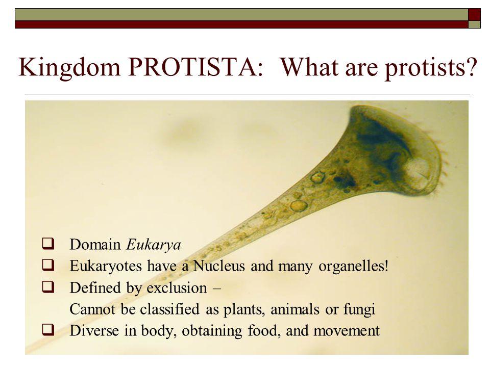 Kingdom PROTISTA: What are protists