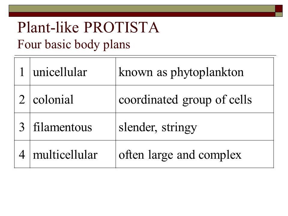 Plant-like PROTISTA Four basic body plans