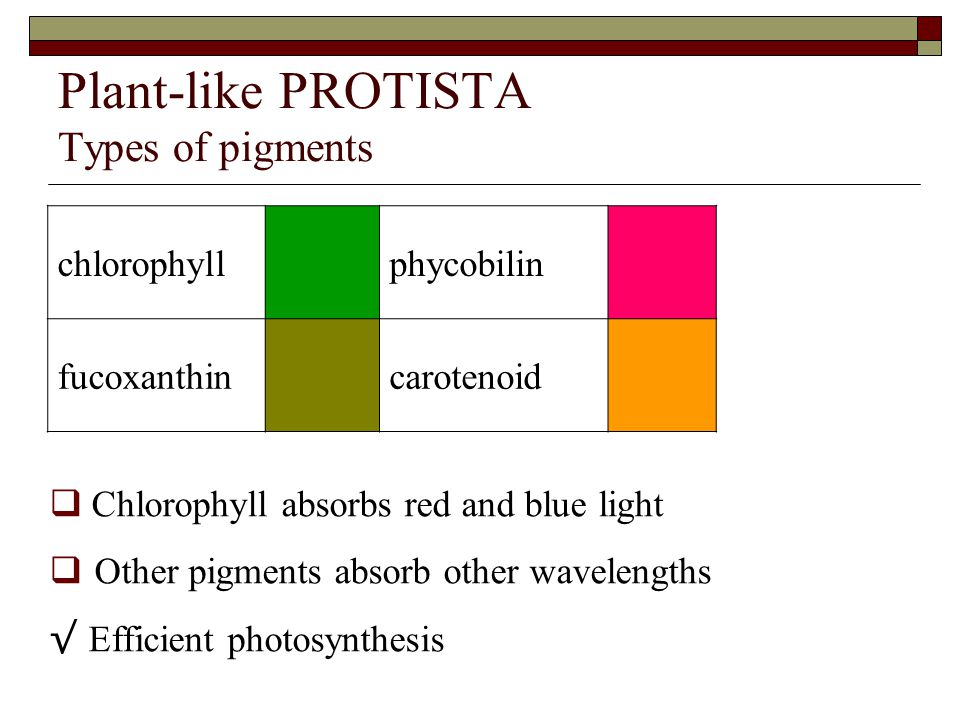 Plant-like PROTISTA Types of pigments