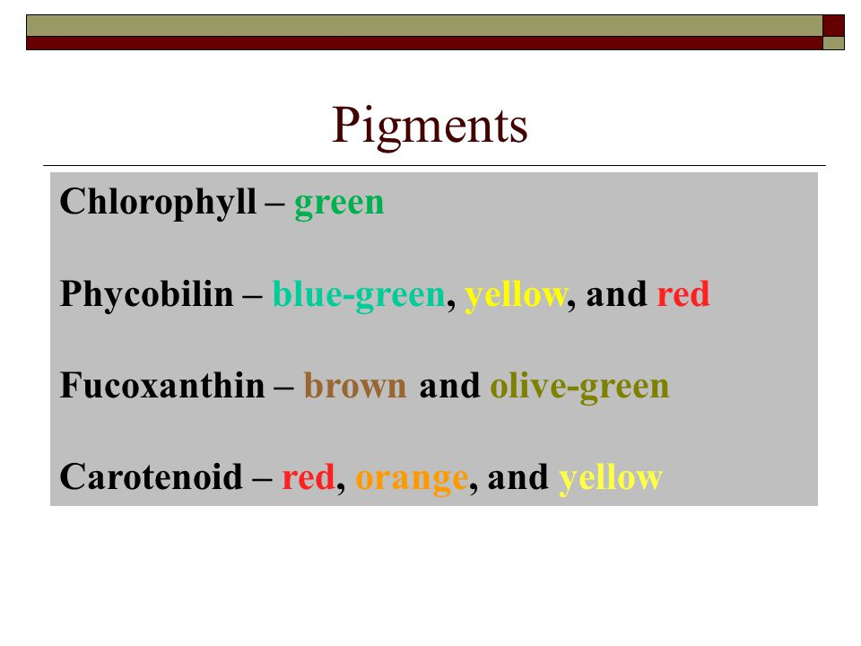 Pigments Chlorophyll – green Phycobilin – blue-green, yellow, and red