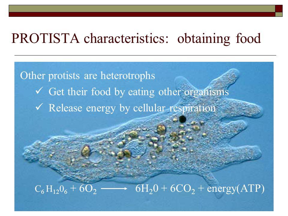 PROTISTA characteristics: obtaining food