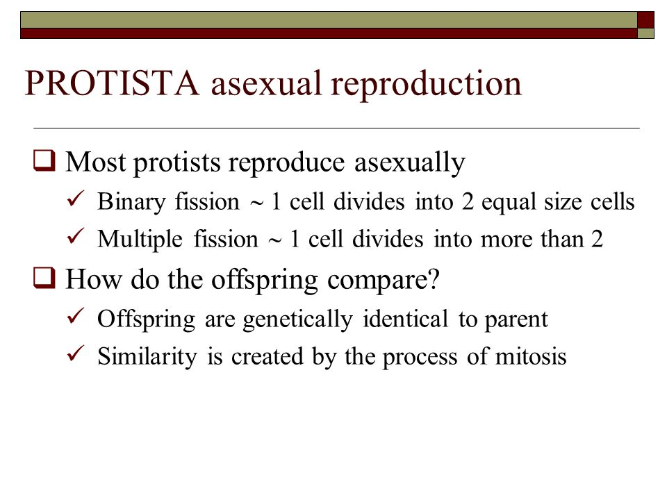 PROTISTA asexual reproduction