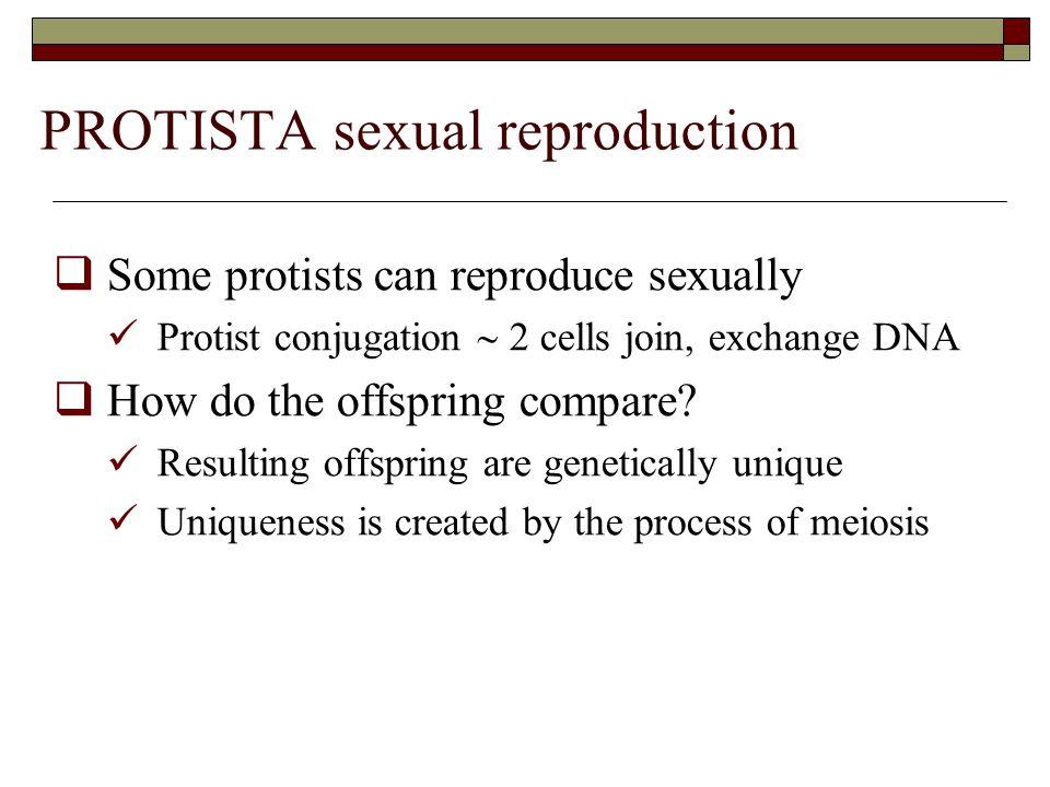 PROTISTA sexual reproduction