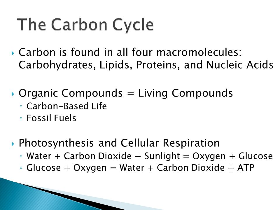The Carbon Cycle Carbon is found in all four macromolecules: Carbohydrates, Lipids, Proteins, and Nucleic Acids.