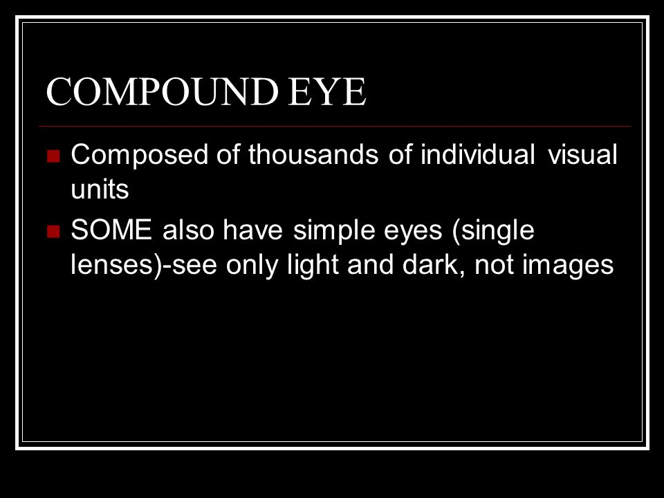 COMPOUND EYE Composed of thousands of individual visual units