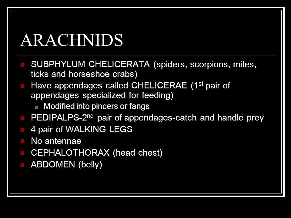 ARACHNIDS SUBPHYLUM CHELICERATA (spiders, scorpions, mites, ticks and horseshoe crabs)