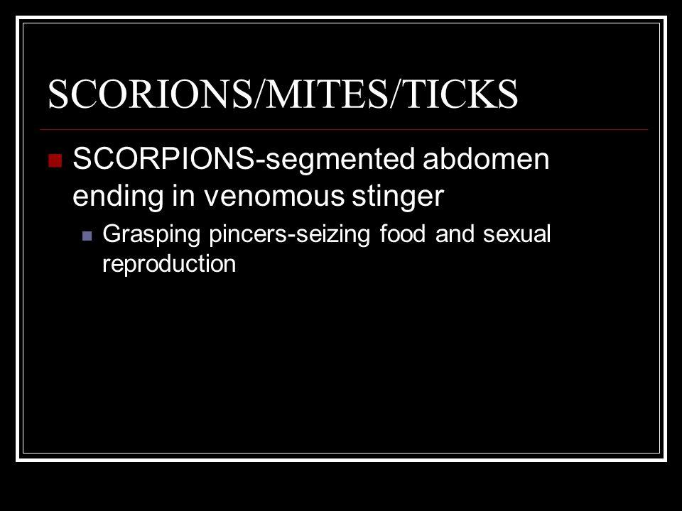 SCORIONS/MITES/TICKS