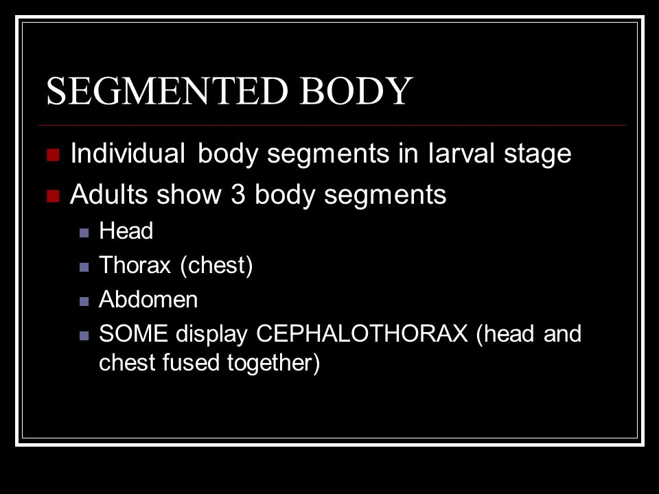 SEGMENTED BODY Individual body segments in larval stage