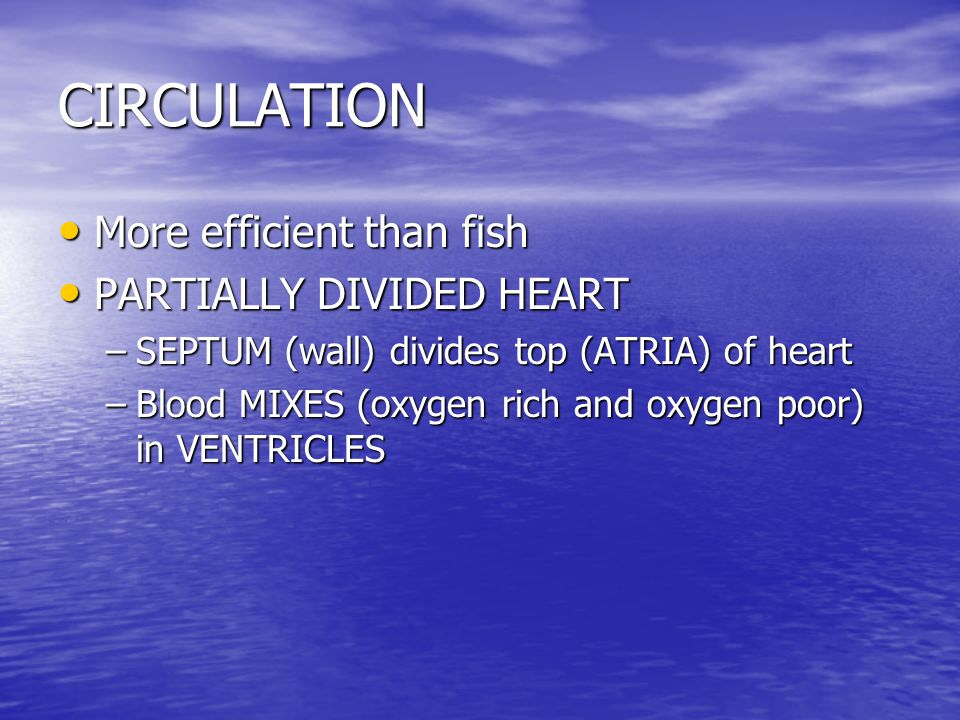 CIRCULATION More efficient than fish PARTIALLY DIVIDED HEART