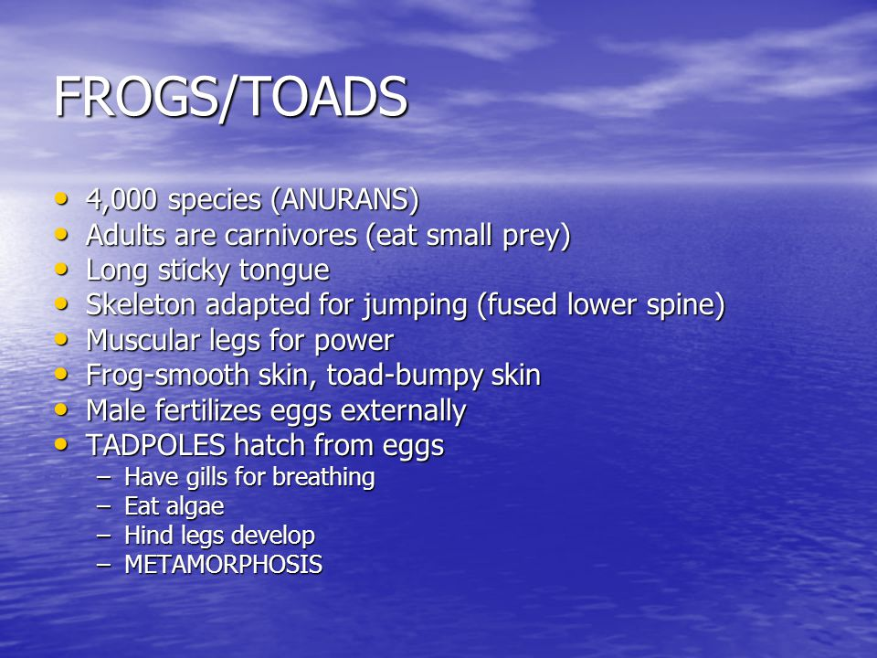 FROGS/TOADS 4,000 species (ANURANS)