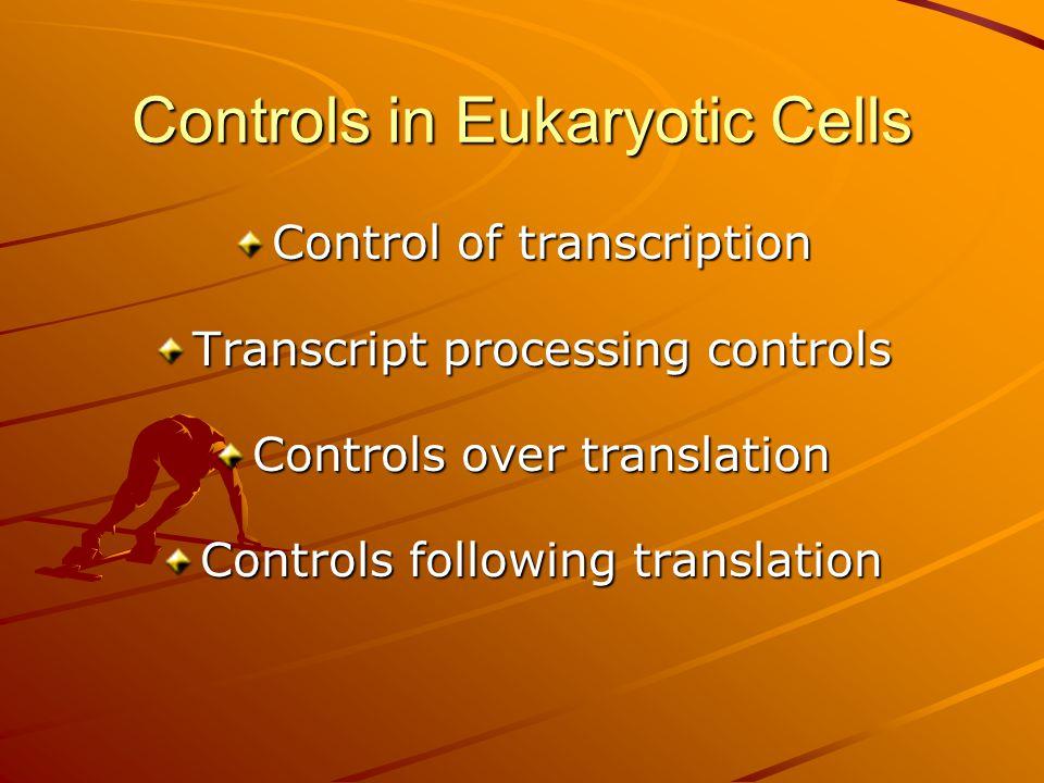 Controls in Eukaryotic Cells