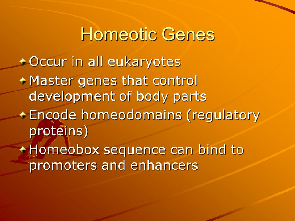 Homeotic Genes Occur in all eukaryotes