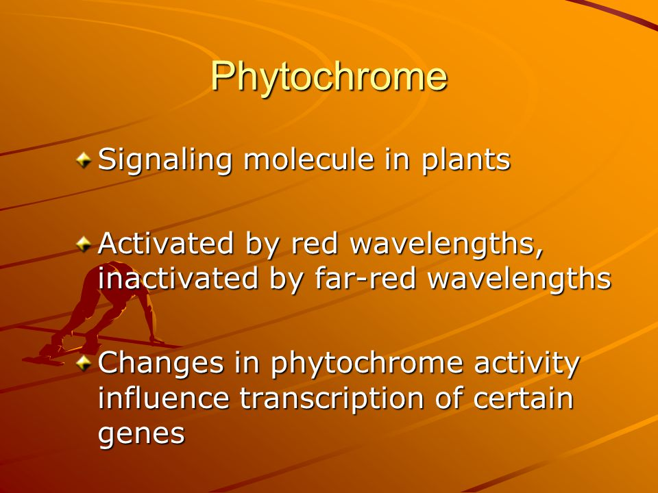 Phytochrome Signaling molecule in plants